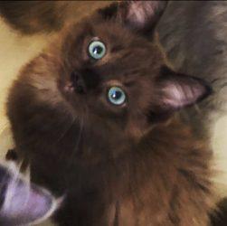 Dixie as a kitten